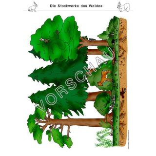 Wald Werkstatt Fur Die Grundschule